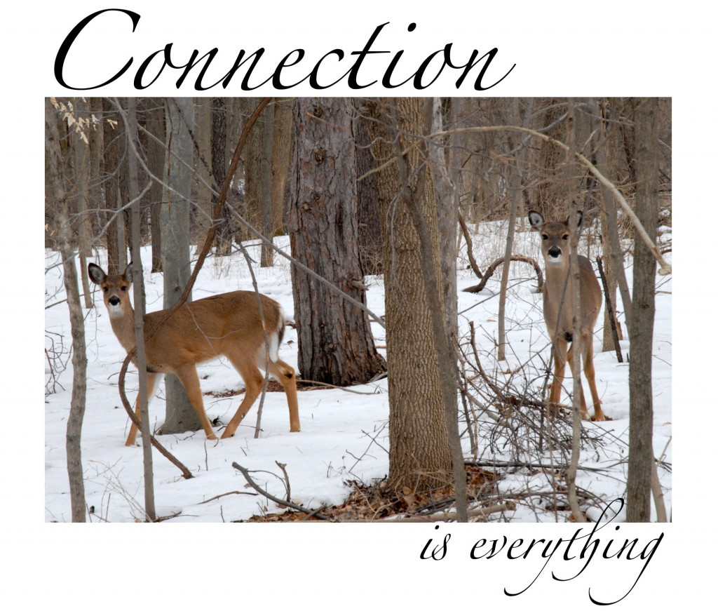 Kim Manley Ort - Contemplation - Slowing Down